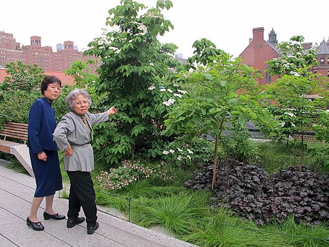 Reiko Yamada and Shigeko Sasamori want to know the name of each plant