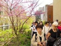 Himawari Hibakusha Choir on the Highline