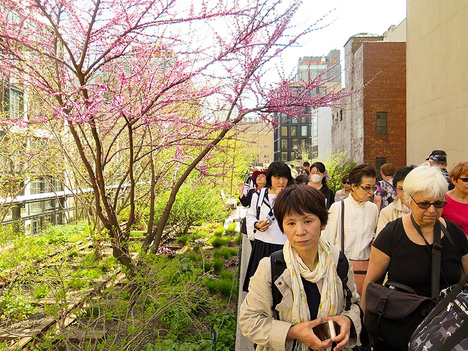 Himawari Hibakusha Choir on the Highline